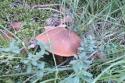 Wyprawa na grzyby